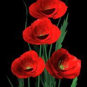 California Poppies.obj.zip 3d model