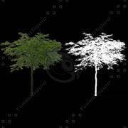 J3D_TREE014.zip 3d model
