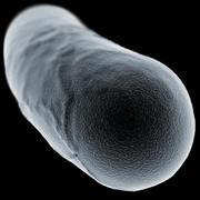 Bacillus Bacteria Cell 1 3d model
