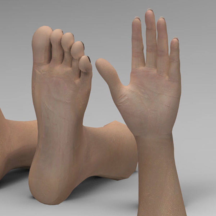 Leg Hand royalty-free 3d model - Preview no. 4
