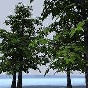 low poly tree 05.zip 3d model