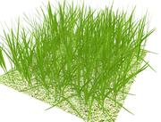 grass large patch.ZIP 3d model