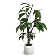 Декоративное растение 3d model