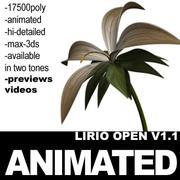 Animated Lirio Open Hi-Poly 3d model