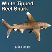 White Tip Reef Shark 3d model