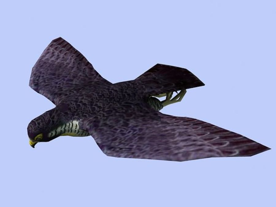 Peregrine Falcon Low Poly  3D Model royalty-free 3d model - Preview no. 5