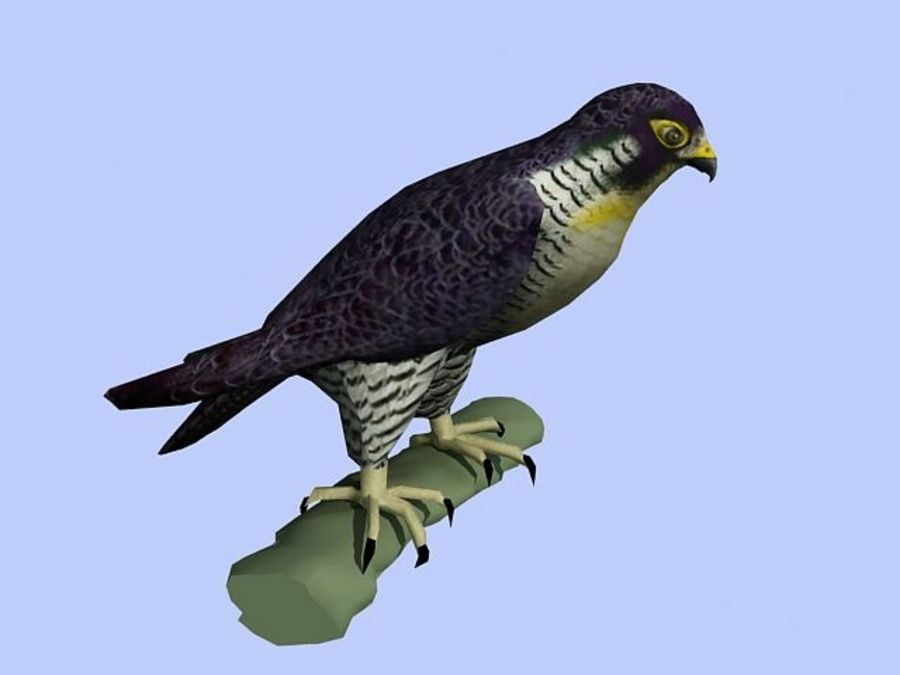 Peregrine Falcon Low Poly  3D Model royalty-free 3d model - Preview no. 6
