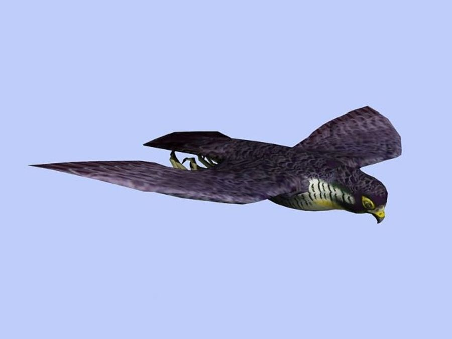 Peregrine Falcon Low Poly  3D Model royalty-free 3d model - Preview no. 4
