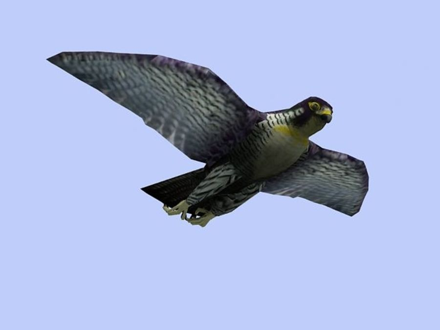 Peregrine Falcon Low Poly  3D Model royalty-free 3d model - Preview no. 3
