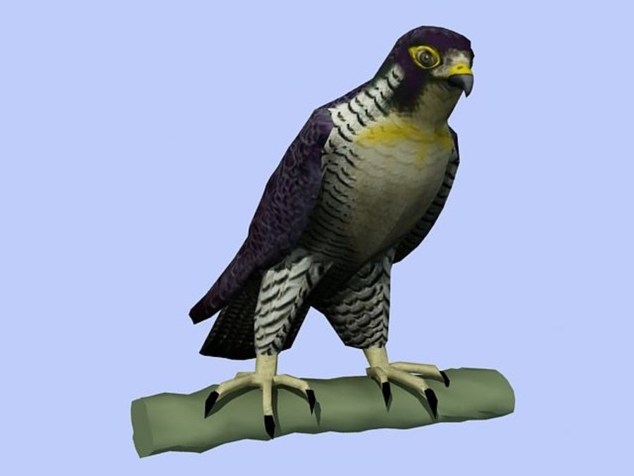 Peregrine Falcon Low Poly  3D Model royalty-free 3d model - Preview no. 1