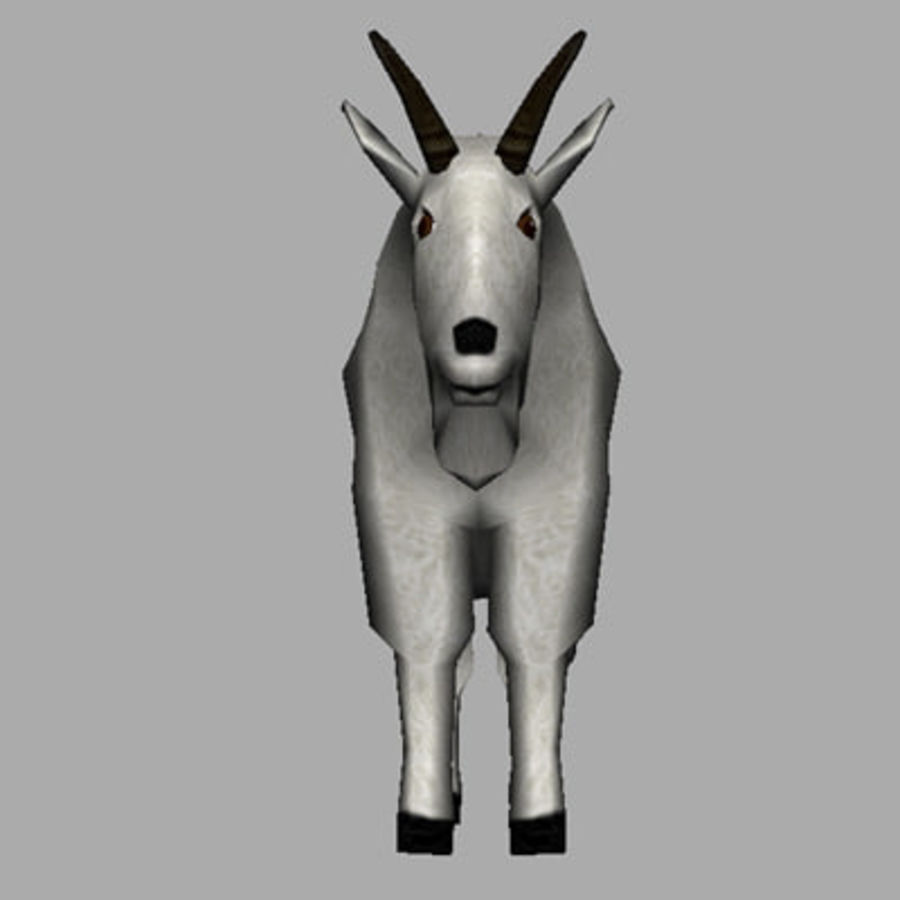 Mountain Goat royalty-free 3d model - Preview no. 5