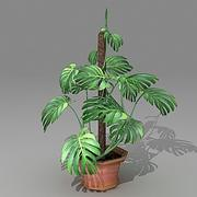 Monstera 3ds.zip 3d model