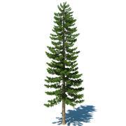 Pine Tree C 3d model