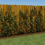 ブドウの木 3d model