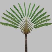 Traveler Tree 3d model
