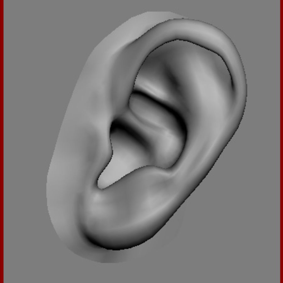 Ear Hyper Real Anatomical Model 3d Model 15 Xsi Obj X Free3d