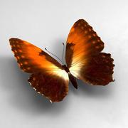 Butterfly 4 3d model