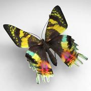 Butterfly 5 3d model