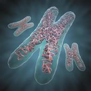Chromosome X 3d model