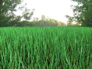 grass.zip 3d model