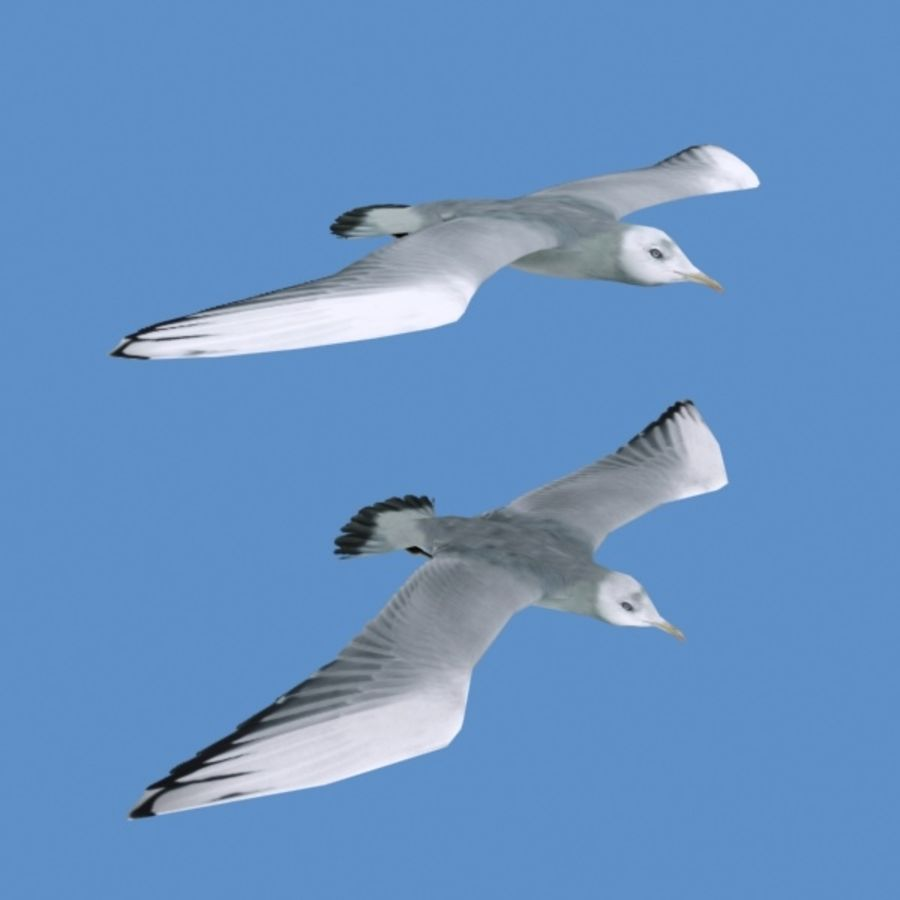 Rigged Seagull royalty-free 3d model - Preview no. 6