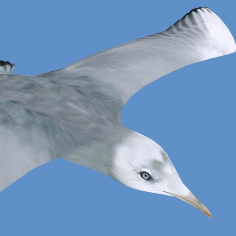 Rigged Seagull royalty-free 3d model - Preview no. 1
