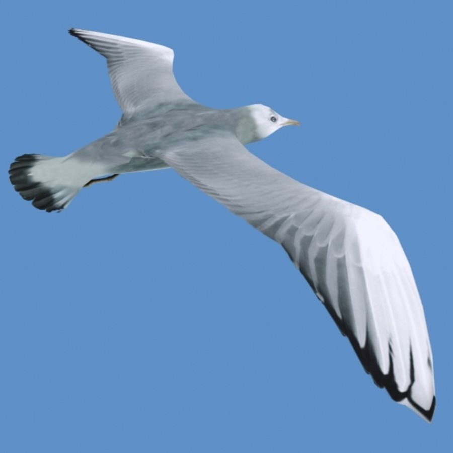 Rigged Seagull royalty-free 3d model - Preview no. 5