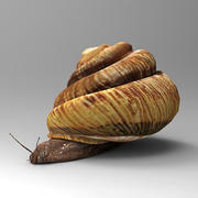 Grape snail 3d model