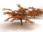 3D Maple Tree 3d model