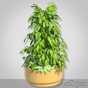 Plante dans un vase Big Bush 3d model