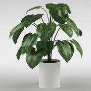 plant_05 3d model