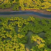 D2.C1.01 Acacia Tree 3d model