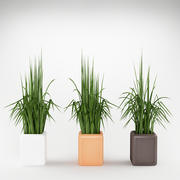 plant_04 3d model