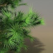 Pinus Hi2 3ds.rar 3d model