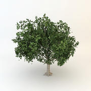 arbre 01 low poly 3d model
