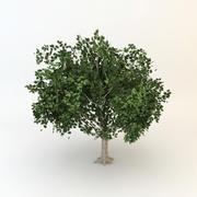 tree 01 low poly 3d model