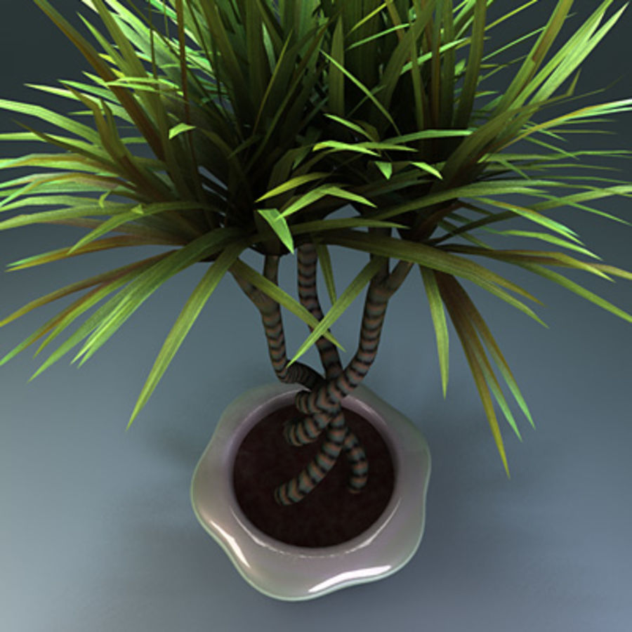 asian bamboo plant royalty-free 3d model - Preview no. 2