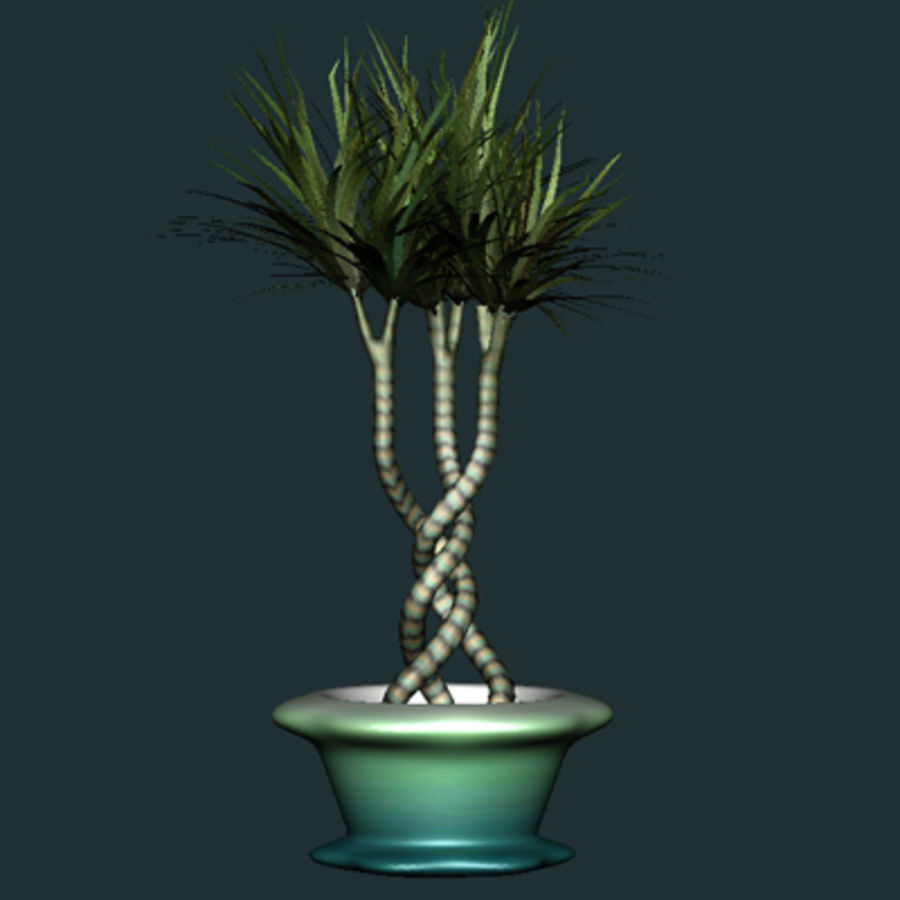 asian bamboo plant royalty-free 3d model - Preview no. 3