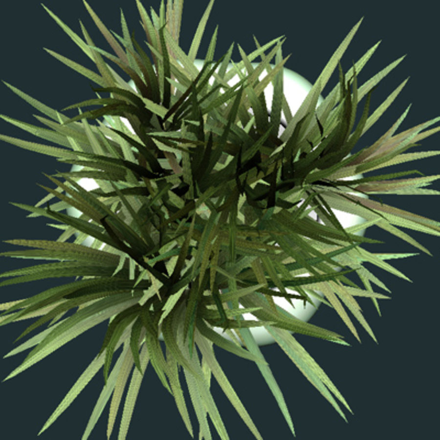 asian bamboo plant royalty-free 3d model - Preview no. 4