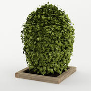 Bush_04 3d model