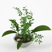 Plant_07 3d model