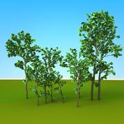 Ağaçlar 3d model
