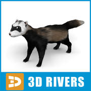 Ferret by 3DRivers 3d model
