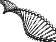 DNA spinning 3d model