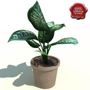 Dieffenbachia amoena Tropic Snow 3d model