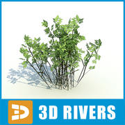 Low growing bushes by 3DRivers 3d model