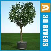 Cedro Elm verano 02 por 3DRivers modelo 3d