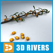 Sea buckthorn by 3DRivers 3d model