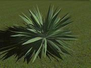 angustifolia.zip 3d model