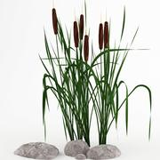 plant_cattail 3d model